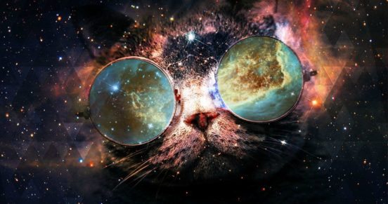 Учёные заявили о возможости открытия пятой фундаментальной силы. Сила в котиках, брат