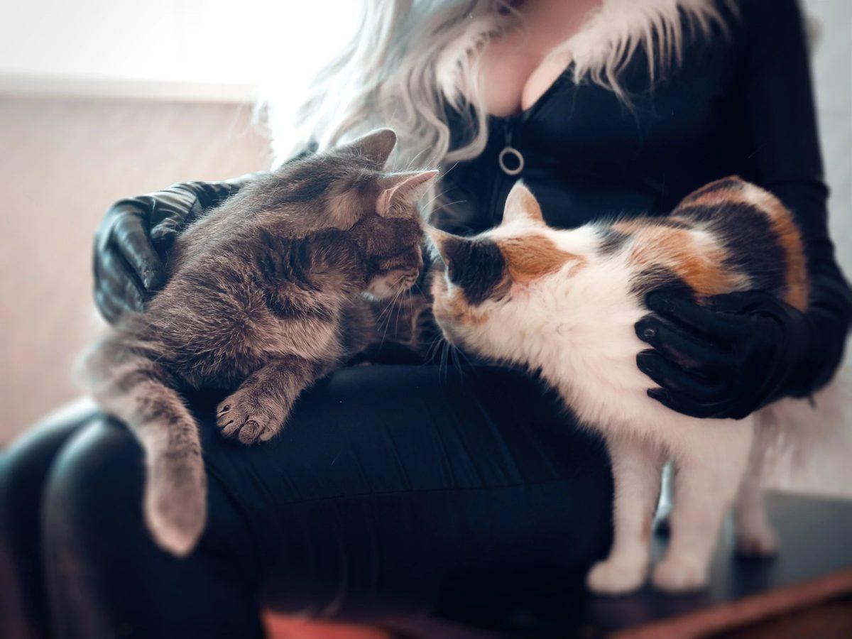 Чёрная кошка косплей