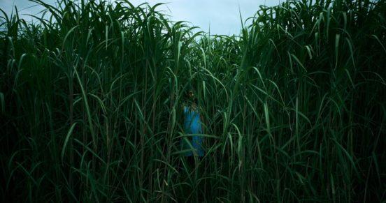 """Рецензия на фильм """"В высокой траве"""""""
