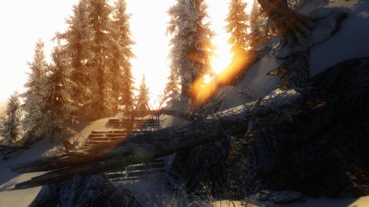Immersive Fallen Trees